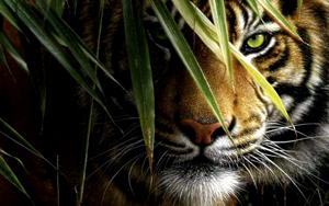 Le Qi Gong du Tigre